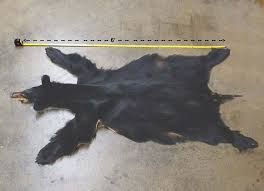How Much Does A Bear Rug Cost Tanning