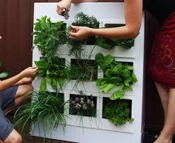 25 ways to start an indoor herb garden brit co