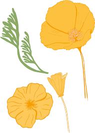 california poppy skillshare projects