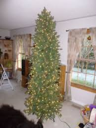 tree buy or sell indoor home items in peterborough