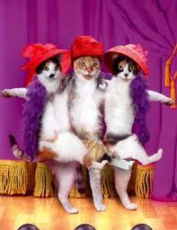 коты парсят Wordstat и радуются удачной автоматизации