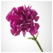 smycka artificial flower carnation dark lilac 30 cm ikea