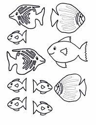 fish pictures color eliolera