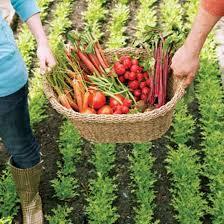 vegetable garden plans for beginners vegetable gardening tips