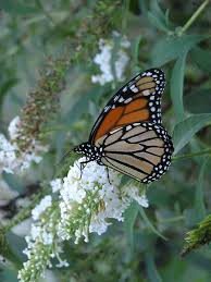 plants attract birds butterflies u2013 and kids your easy garden
