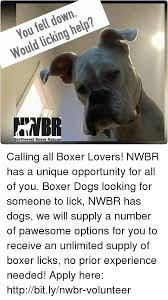 rescue a boxer dog 25 best memes about boxer dogs boxer dogs memes