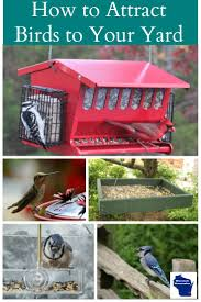 to attract birds to your yard in 3 easy steps wisconsin homemaker