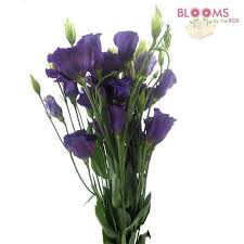 lisianthus flower wholesale lisianthus lisianthus for diy weddings