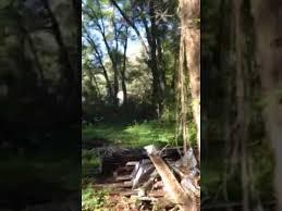 walking around the farm saw slender the trees