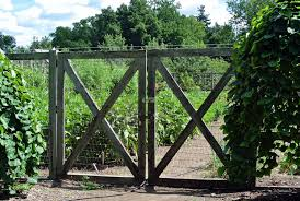 Vegetable Garden Blogs by Growing Tomatoes At My Farm The Martha Stewart Blog