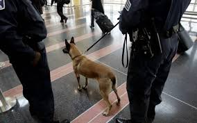 belgian shepherd san diego watch police dog mauls handcuffed black man in america sparks