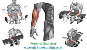 Best Forearm - the four best forearm exercises all bodybuilding com