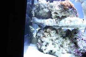 Aquascaping Rocks Aquascaping Rocks Touching Glass Or No Reef Sanctuary