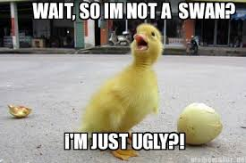 Meme Duck - surprised duck meme imgur