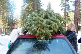 cutting down a christmas tree is sustainable family fun green