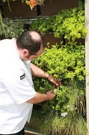 living wall gardens enhance senior living facilities livewall
