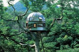 Top 10 Spectacular Tree houses in the World  Weird Monk
