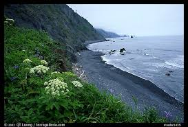 picture photo coastline with black sand beach and wildflowers