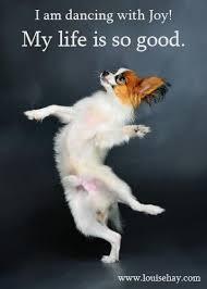 Dancing Dog Meme - dog dancing with joy dancerlover com