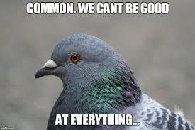 Meme Bird - edited pigeon meme bird x