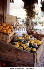 a variety of small pumpkins and ornamental gourds for sale at