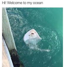 Stingray Meme - imgur the most awesome images on the internet awwwww