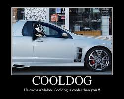 Cool Dog Meme - image 43044 cool dog know your meme