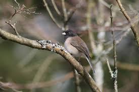 how five common birds got their names u2013 jeremy schwartz u2013 medium