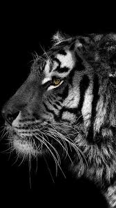 wallpaper black tiger hd black and white animals tigers wallpaper 82288
