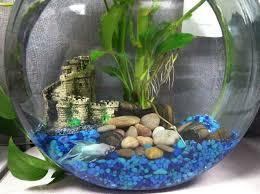 Betta Fish Decorations 10 Best Fishtank Decoration Images On Pinterest Fish Tanks