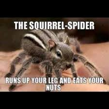 Cute Spider Meme - funny spider squirrel w630