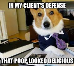 Dog Poop Meme - lawyer dog in my client s defense that poop looked delicious