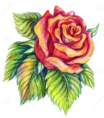 Nice Flower Picture - best 25 flower drawings ideas on pinterest pretty flower