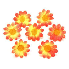 compare prices on orange gerbera daisies online shopping buy low