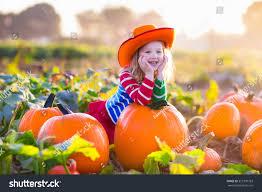 little picking pumpkins on halloween stock photo 321970763