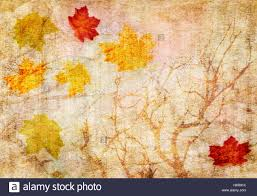 Fall Autumn by Abstract Backdrop Background Texture Fall Autumn Leaf Tree Antique