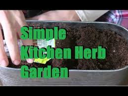 window herb harden planting a simple windowsill herb garden youtube