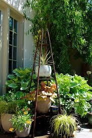 bromeliads diana u0027s designs austin