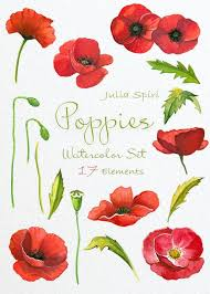poppies flowers watercolor poppies flowers clipart poppy painted watercolor
