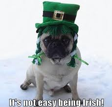 St Patricks Day Funny Memes - memes images funny irish pug st patrick s day wallpaper and
