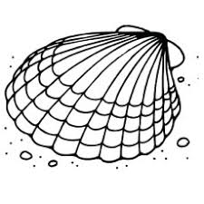 25 free printable shell coloring pages