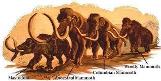 mammoth glen canyon