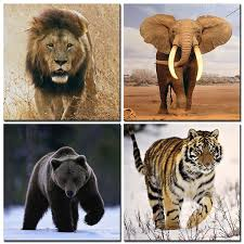 amazon com natural art lion elephant tiger bear wall art