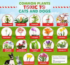 plants that are toxic for your cats and dogs