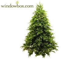 ft asheville prelit frasier fir artificial tree max non