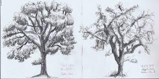 Oak Tree Drawing Tree U2013 Andrea U0027s Oca Study Blog