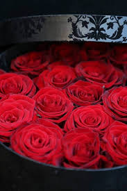 12 best valentine u0027s day flowers by phillo flowers images on