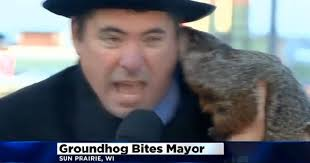 groundhog day 2015 conflicting forecasts and a bitten mayor cbs