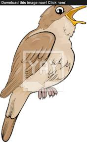 cartoon cockatiel nightingale bird cartoon illustration vector yayimages com
