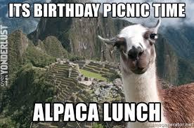its birthday picnic time alpaca lunch bossy the llama meme